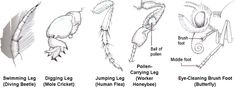 insect legs - Google Search