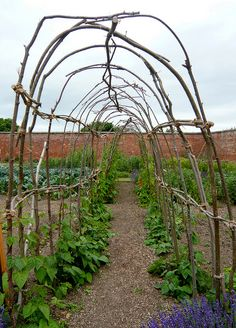 A green bean tunnel - the girls would love it!  Could do peas as well.