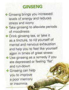 The Health Benefits of Ginseng Natural Health Remedies, Natural Cures, Natural Healing, Herbal Remedies, Healing Herbs, Medicinal Plants, Natural Medicine, Herbal Medicine, Ginseng Tea