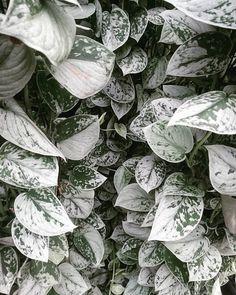Idea Of Making Plant Pots At Home // Flower Pots From Cement Marbles // Home Decoration Ideas – Top Soop Easy House Plants, House Plants Decor, Garden Plants, Best Indoor Plants, Cool Plants, Unusual Plants, Houseplants Safe For Cats, Silver Plant, Pothos Plant