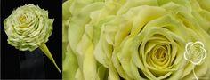 http://dream-flowers.com/wp-content/gallery/glamelia/wedding_bouquet_modern_14.jpg floral design by Svetlana Chernyavsky