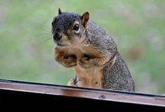 Flexing Guido squirrel