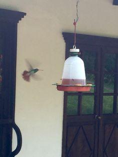 Hummingbird in Cali, Colombia