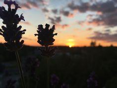 Sunset Tumblr