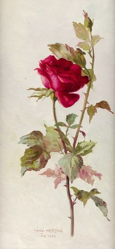 Minni (Hermine) Herzing - Rote Rose....1964.  Oh my, this is the print that I admired and claimed in my great aunt's library
