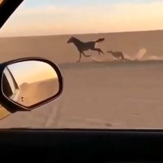 Race Between Horse & Dog - Tiere - Chien All About Animals, Animals And Pets, Baby Animals, Cute Funny Animals, Funny Dogs, Cute Dogs, Beautiful Horses, Animals Beautiful, All Nature