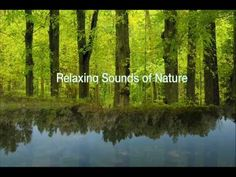 Relaxing Sounds of Nature - The Beautiful Song of The Forest