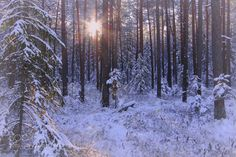 Winter in the forest by ginaups. Please Like http://fb.me/go4photos and Follow @go4fotos Thank You. :-)