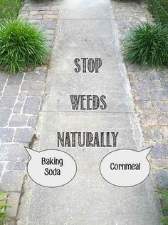 pesky weeds naturally and for good in walkways and rocky borders with Baking Soda or Cornmeal.Stop pesky weeds naturally and for good in walkways and rocky borders with Baking Soda or Cornmeal. Garden Weeds, Lawn And Garden, Garden Art, Terrace Garden, Garden Paths, Organic Gardening, Gardening Tips, Gardening Services, Gardening Gloves