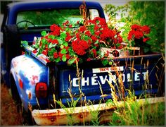 blue. rusted. chevy truck. red geraniums. god.