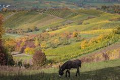 Explore ZoRRaW photography's photos on Flickr.   #Beautiful #fall #nature #fields #horses #country #photography