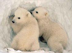 February 27th is National Polar Bear Day!