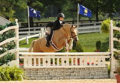 Looking forward to seeing my own Jr. &  her Palomino in the Hunter division!