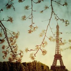 Paris in spring photo - Le printemps - Eiffel tower and spring blossoms