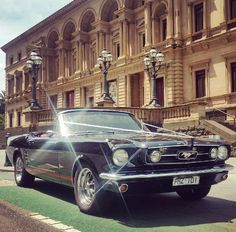 Mustangs in Black 1966 GT Convertible Ford Mustang outside the old Melbourne Treasury Building for a wedding shoot.