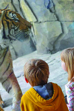 Hey families! Bring the kids to Jax for Kids Free November! They�ll love the fun and you�ll love the price.