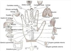 All Natural Cures For Yeast Infections Natural Health Remedies, Natural Cures, Natural Healing, Nasal Cavity, Adrenal Glands, I Want To Know, Pressure Points, Reflexology, Acupuncture