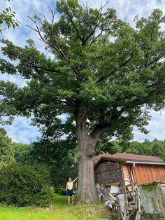 300 ročný dub-Moravské Lieskové Plants, Plant, Planets