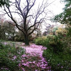 Cyclamens d'automne Plane Tree, Sidewalk, Country Roads, Instagram Posts, Plants, Side Walkway, Walkway, Plant, Walkways