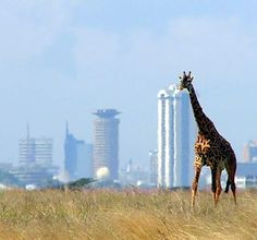 Nairobi, Kenya - the country's capital city can attract visitors of the wild side.