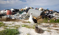 After 60 million years of extreme living, seabirds are crashing