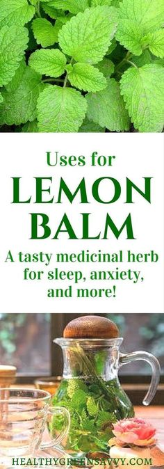 Lemon balm is an amazing herb that deserves a place in your garden and herbal remedy arsenal. Click to find out more or pin to save for later.   lemon balm uses   garden   medicinal plants   sleep tea   herbal remedies   natural remedies  