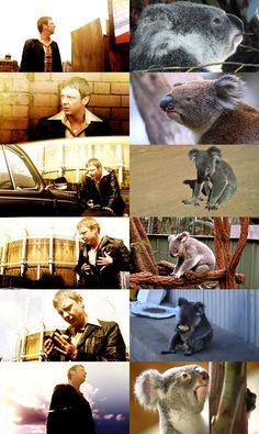 Sam Tyler is a koala, obviously