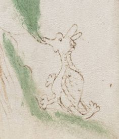 Voynich Manuscript (50) detail - appears to be a little dragon eating a plant