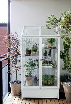 O armário antigo virou uma pequena estufa para a varanda. Que tal usá-la para cultivar as plantinhas que você mais gosta?  Aposte na jardinagem como um hobby relaxante.