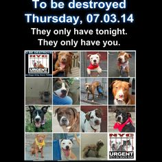 14 dogs are relying on us to give them a future.  Please share everywhere to make their dream come true.  To rescue a Death Row Dog, Please read this: http://urgentpetsondeathrow.org/must-read/  To view the full album, please click here: https://www.facebook.com/media/set/?set=a.611290788883804.1073741851.152876678058553type=3