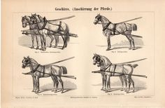 1894 Draft Animals Antique Print Geschirre Draught by Craftissimo, €12.95