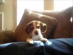 Top 10 divertenti e simpatici video sui cani