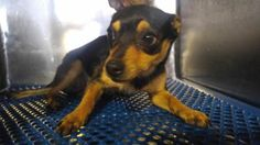 UPDATE:  Current Status Is Unknown. 34929220 located in El Paso, TX, to be destroyed 4/30/17