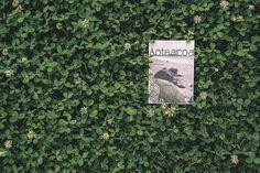 Postcard Aotearoa