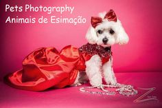 Photography By Yoni 516-395-2769 www.photographyby... Photography By Yoni 55-21-97270-9920 Av. das Américas, 3255 - Barra da Tijuca 22631-001 Rio de Janeiro, Rio de Janeiro #fotografia #fotógrafo #barraGarden #riodejaneiro #photographybyyoni #yonilevy #brazil #headshots #modeling #modelphotography #events #eventphotography #eventphotographer #newyorkcityphotography #newyorkphotographer #eventos #eventosfotografia #eventsfotografo