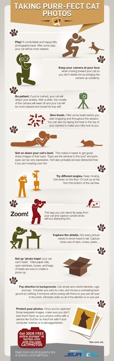 7 Steps to Taking Purfect Cat Photos [INFOGRAPHIC]