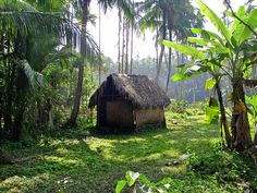 A hut in Bagerhat. Landscape Photos, Landscape Photography, Village Photography, Amazing Gifs, Art Programs, Glass House, Writing Ideas, Summer Art, Asia Travel