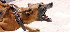 Por semana tres peleas de perros, en Tehuacán