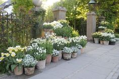 """Claus Dalby says, an all-white arrangement """"becomes sad and barren [stark?] if the white stands along."""""""