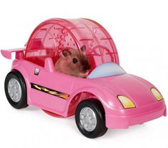 Une voiture pour hamster