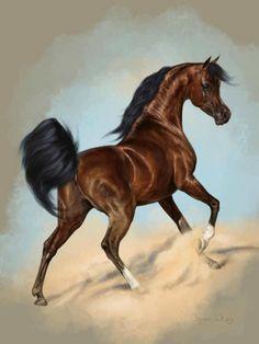 This beautiful Egyptian bred stallion epitomizes the fantasy of the Arabian horse.