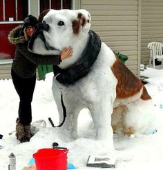 Funny pictures about Impressive Snow Sculpture. Oh, and cool pics about Impressive Snow Sculpture. Also, Impressive Snow Sculpture photos. Cute Funny Animals, Cute Dogs, Diy Pour Chien, Amstaff Terrier, Animal Pictures, Funny Pictures, Random Pictures, Funny Pics, Ice Art