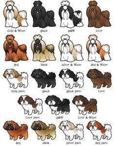 Achei uma gracinha esses cartoons, tem todas as colorações de shih-tzu. Faltou o tigrado que é menos comum.    Fonte: http://www.zazzle.com...