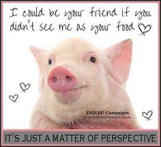 pigs are not food; go #vegan