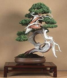 Bonsai madera muerta BONSAI More At FOSTERGINGER @ Pinterest
