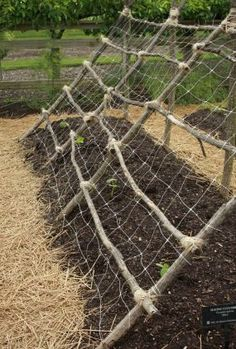 Beans and peas can grow up the netting while lettuce grows in the shade from their vines.