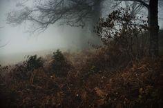 Saisons noires | Julien Coquentin