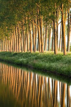 Damse Vaart at sunrise, Damme, Belgium