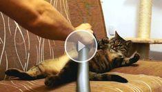 Teile dieses erstaunliche Video mit deinen Freunden!
