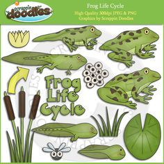 Frog Life Cycle Clip Art Download